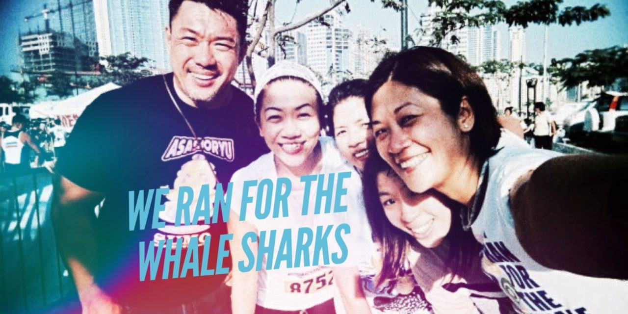 Cool Running: for the whale sharks