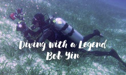 Dive Seafari – Diving with Legends