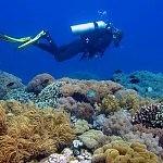 Dive Apo Island