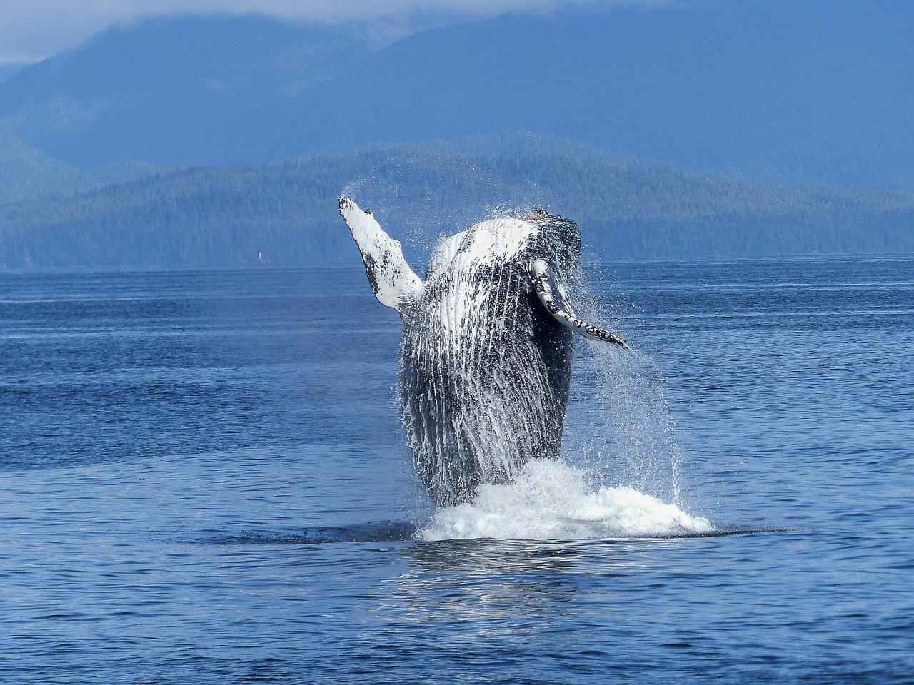 A Whale Tale in Seattle – San Juan Islands Whale Watching