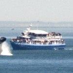 humpback whale in san juan islands