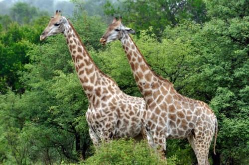 Kruger Park in my 1 week in South Africa