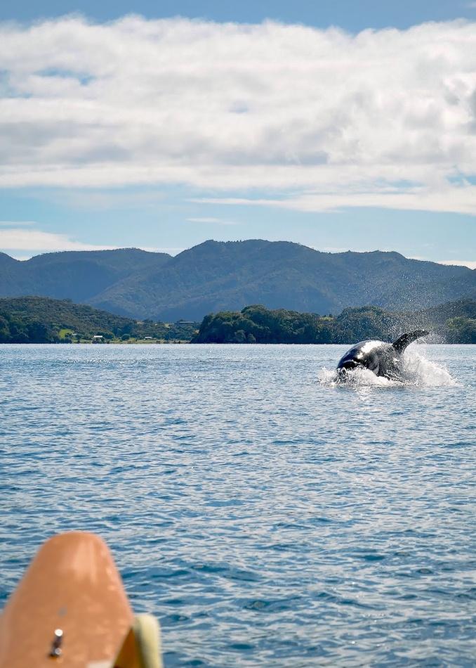 orca charging